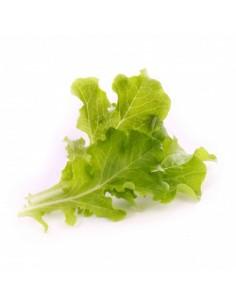 veritable-nbbx23xxxxvb-vegetable-seed-lettuce-1.jpg